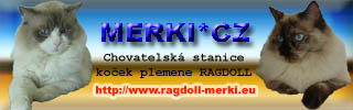 MERKI*CZ - chovatelská stanice koček plemene Ragdoll - http://www.ragdoll-merki.eu/